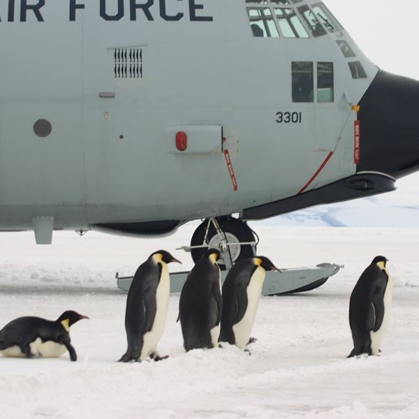 Penguins with U.S. air force cargo plane background.