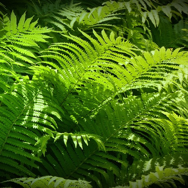 Green ferns, graphene composites can contribute to a greener future